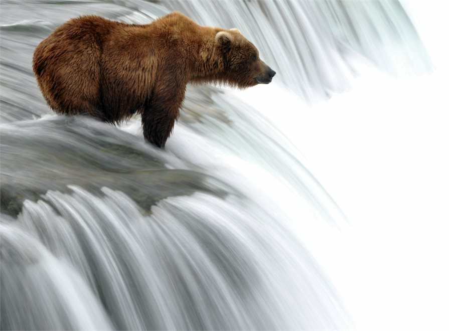 Bear standing at the top of a waterfall