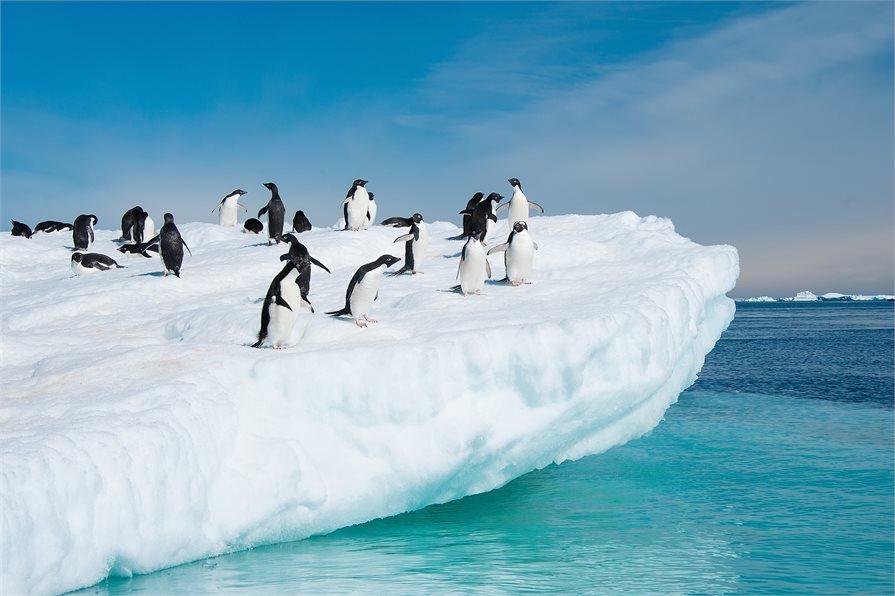 Penguins on Ice berg Antarctica