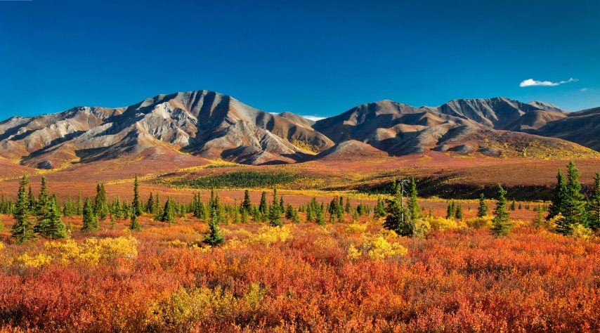 View of the Denali National Park