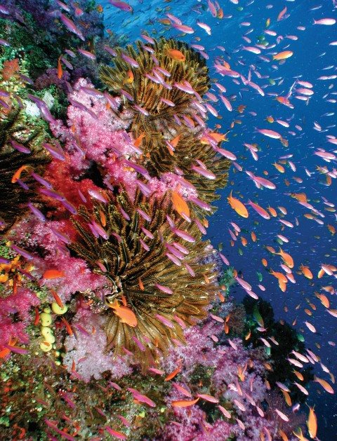 Sea life and colourful reefs underwater