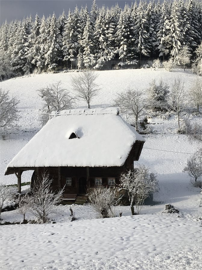 snow-covered villages and forests with trees laden with snow