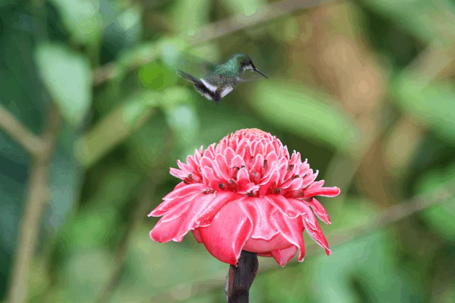 hummingbird sanctuary bird and flower