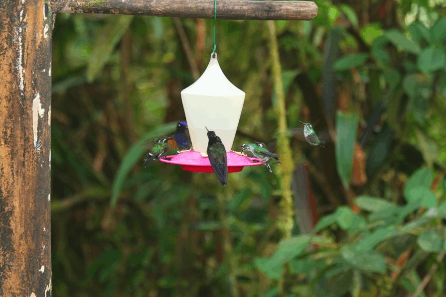 hummingbird sanctuary birds feeding