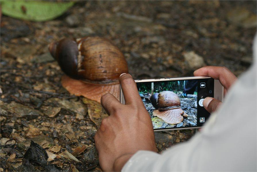 large snail taking photo wildlife sanctuary