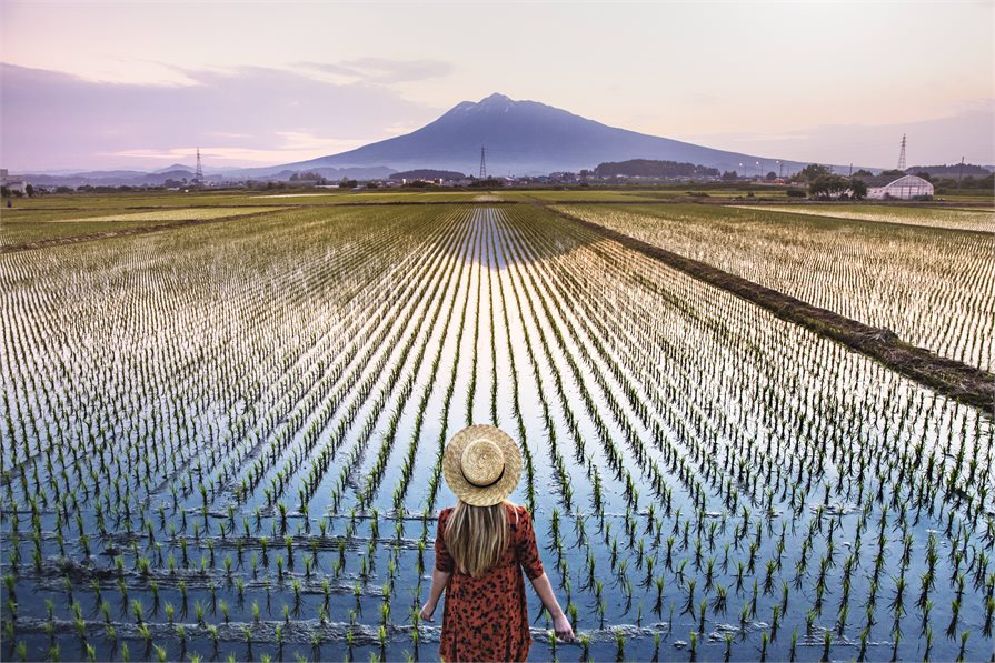 Japanese rice field with mountain
