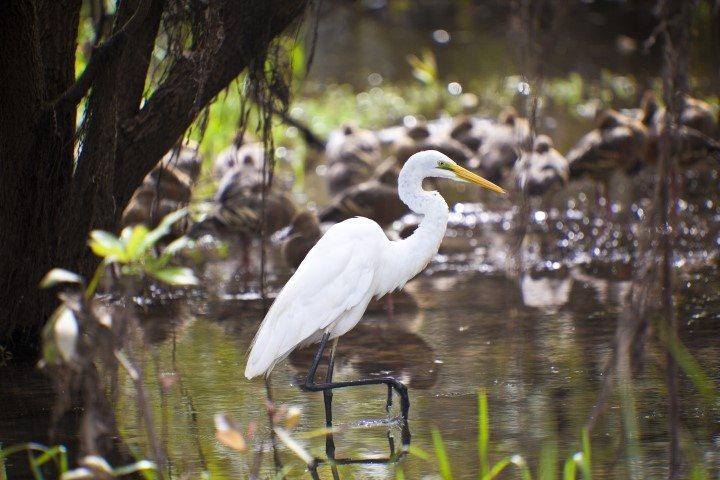 Wildlife in Kakadu National Park