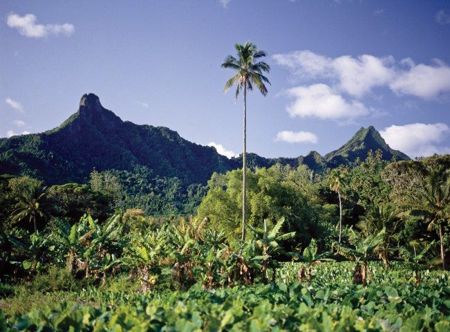 Mountains and forest to trek through in the cook islands